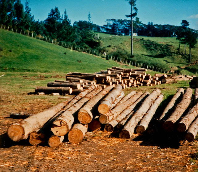 0006_timber_for_kiwifruit_poles