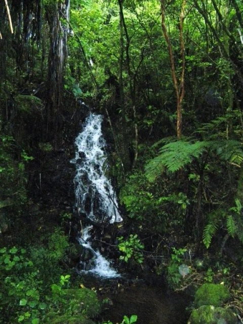 Bush waterfall into Oakura River