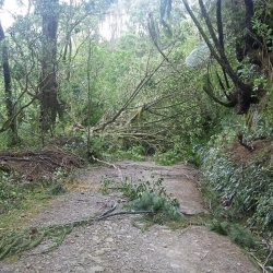 Native tree down over track